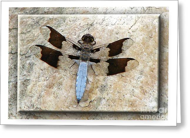 Greeting Card featuring the photograph Granite Dragon by Deborah Johnson