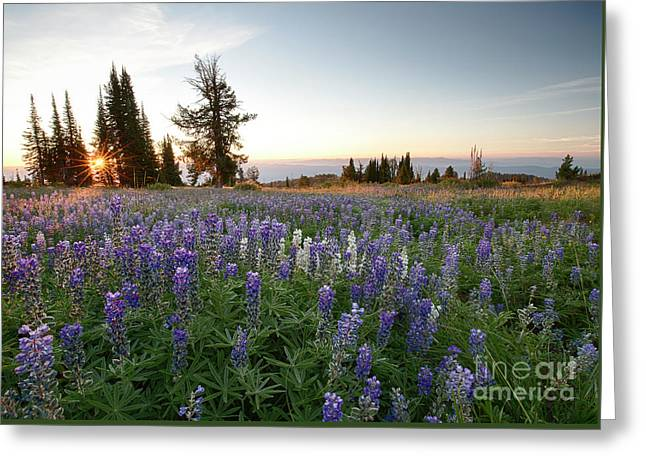 Granite Mountains Sunrise Greeting Card by Idaho Scenic Images Linda Lantzy