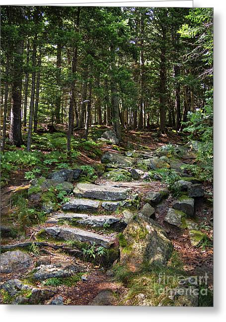 Granite Steps, Camden Hills State Park, Camden, Maine -43933 Greeting Card