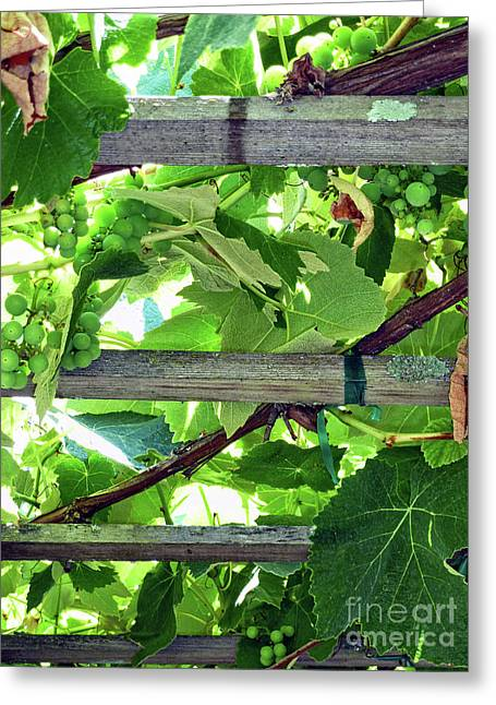 Grape Arbor Greeting Card