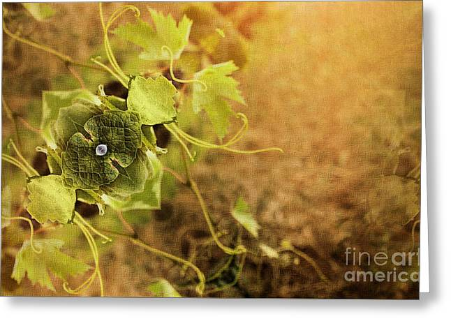 Grape Commodity Greeting Card