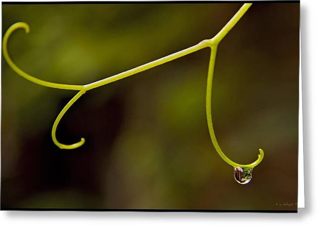 Grape Drop Greeting Card by Daniel G Walczyk
