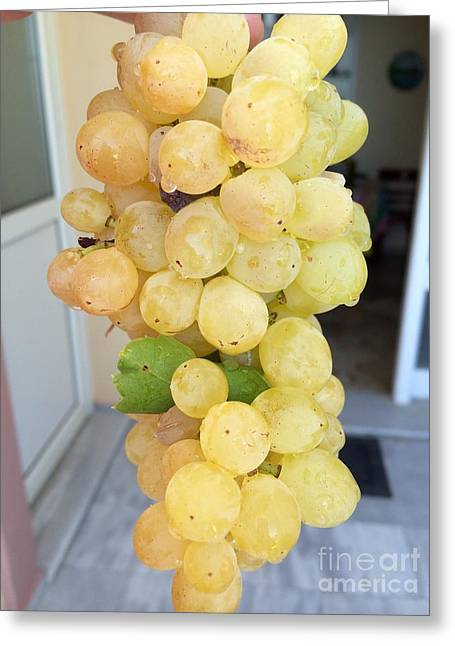 Grape From Chios Mountains In Greece Greeting Card