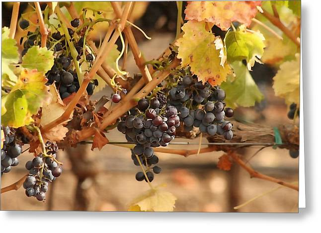 Grape Harvest Greeting Card by Art Block Collections
