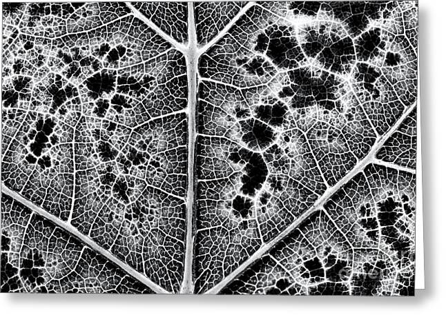 Grape Leaf Monochrome Greeting Card by Tim Gainey