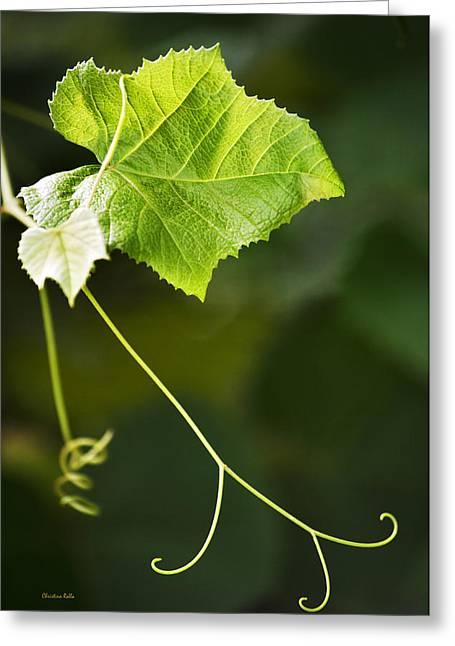 Grape Vine Greeting Card by Christina Rollo