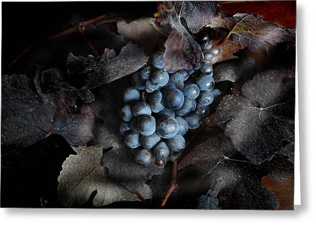 grape vine I Greeting Card by Jon Daly