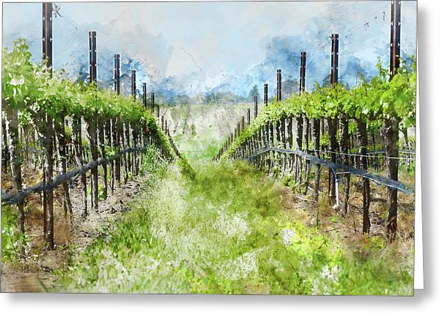 Grape Vines In Napa Valley California Greeting Card by Brandon Bourdages