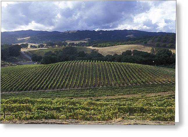 Grape Vines On Opolo Vineyards Greeting Card by Rich Reid