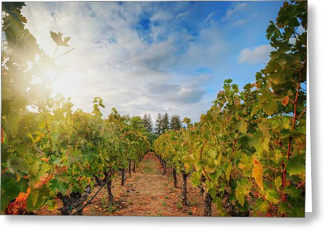 Grape Vineyard At Winery In Napa  Greeting Card by Jennifer Rondinelli Reilly - Fine Art Photography