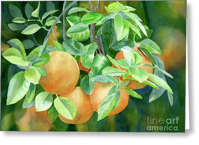 Grapefruit With Background Greeting Card