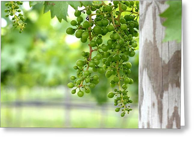 Grapes On The Vine Greeting Card by Brian Manfra