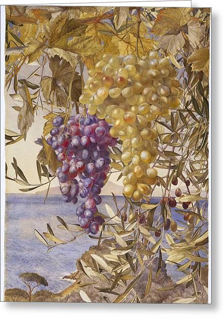 Grapes And Olives Greeting Card