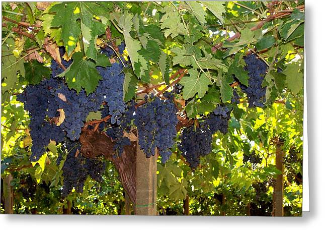 Grapes Are Ready Greeting Card
