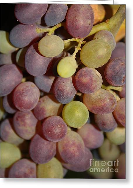 Grapes Greeting Card by Carol Groenen