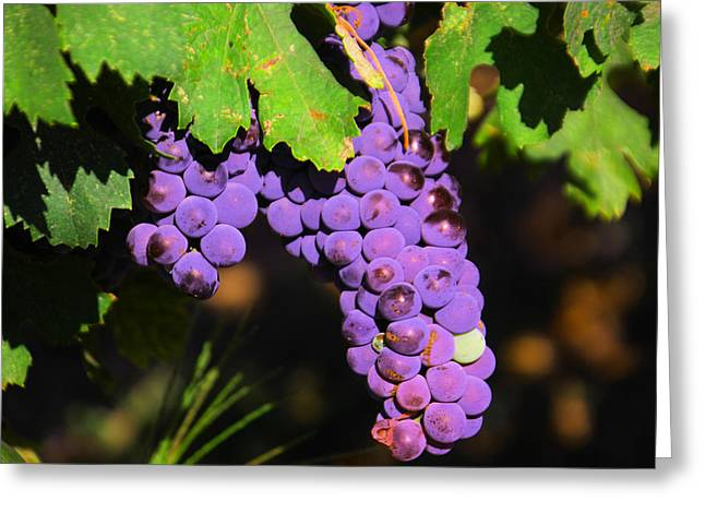 Grapes In The Sun Greeting Card by Jeff Swan