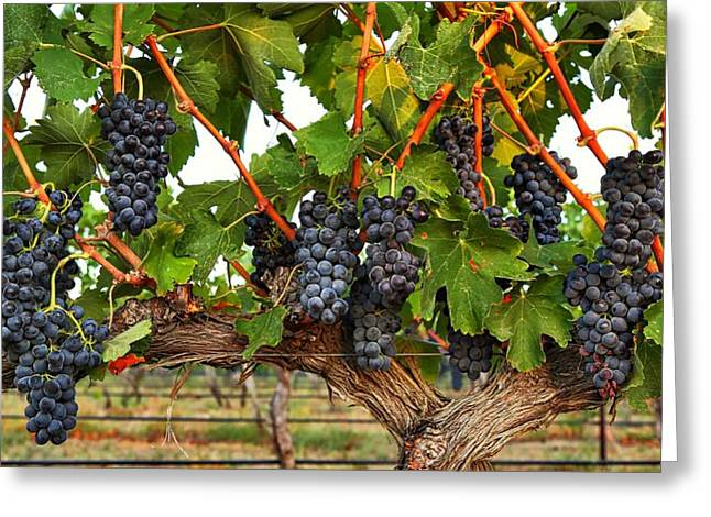 Grapes Of The Yakima Valley Greeting Card by Lynn Hopwood
