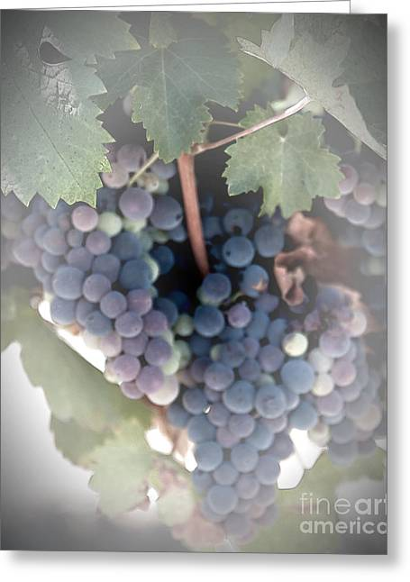 Grapes On The Vine I Greeting Card by Sherry Hallemeier