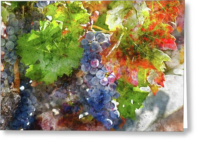 Grapes On The Vine In The Autumn Season Greeting Card by Brandon Bourdages