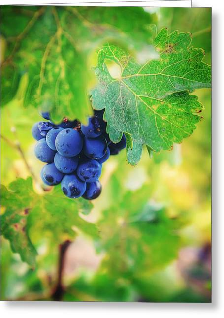 Purple Grapes On The Vine - Napa Valley Greeting Card by Jennifer Rondinelli Reilly - Fine Art Photography