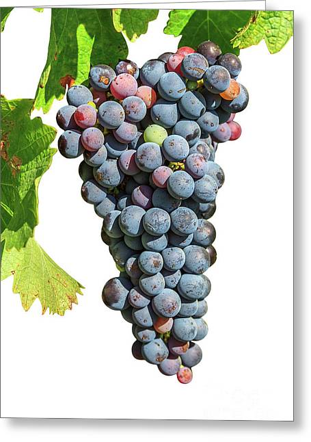 Grapes On Vine Greeting Card