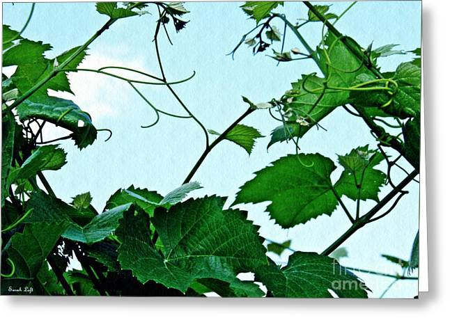 Grapevine 2 Greeting Card