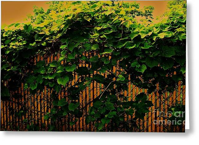 Grapevine Abstract Greeting Card by Marsha Heiken