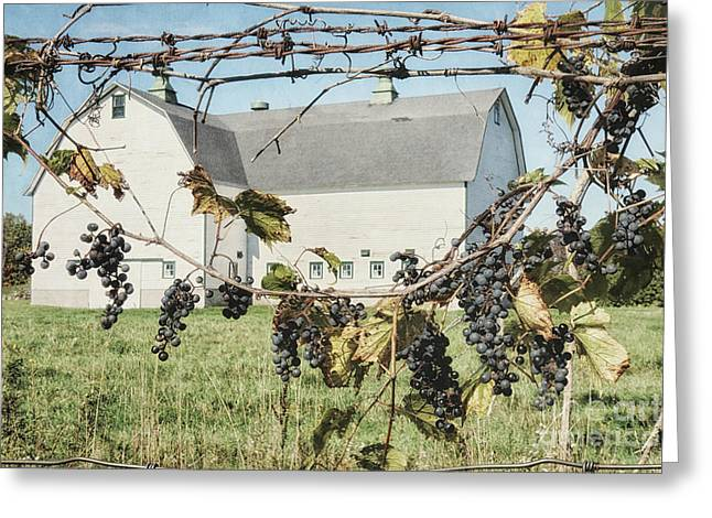 Grapevine Greeting Card by Alison Sherrow I AgedPage