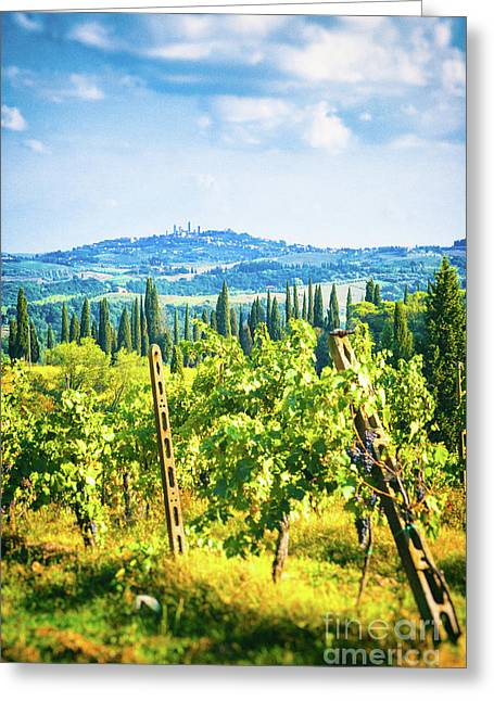 Greeting Card featuring the photograph Grapevine In San Gimignano Tuscany by Silvia Ganora