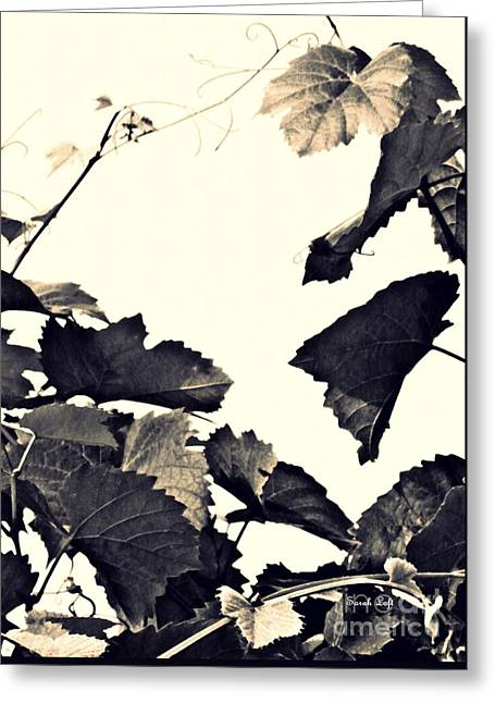 Grapevine In Sepia Greeting Card by Sarah Loft