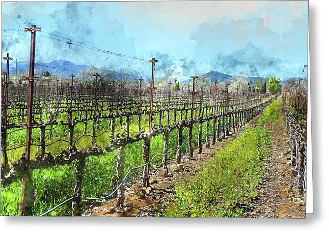 Grapevines In A Row In Napa Valley California Greeting Card by Brandon Bourdages