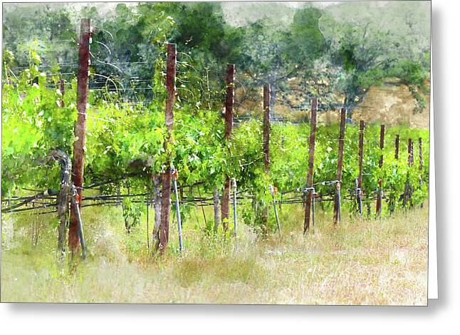 Grapevines In California Greeting Card by Brandon Bourdages