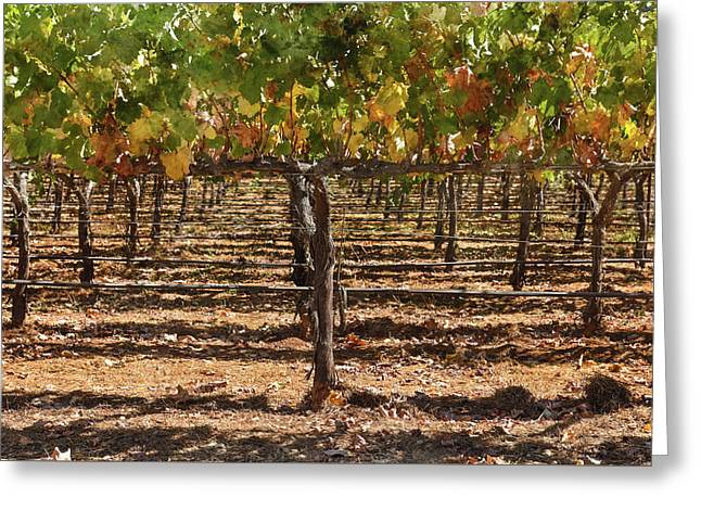 Grapevines In The Fall Greeting Card by Brandon Bourdages