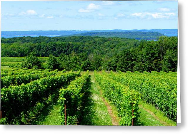 Grapevines On Old Mission Peninsula - Traverse City Michigan Greeting Card by Michelle Calkins