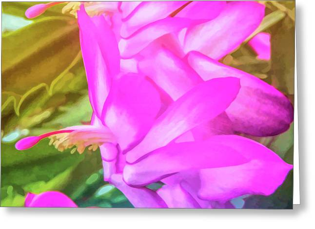 Greeting Card featuring the photograph Graphic Rainbow Christmas Cactus Flower by Aimee L Maher Photography and Art Visit ALMGallerydotcom