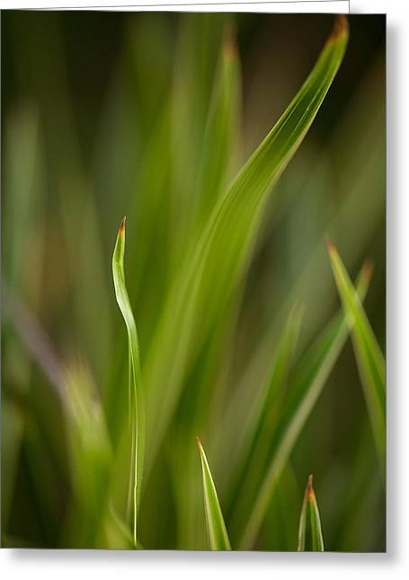 Grass Abstract 1 Greeting Card by Mike Reid