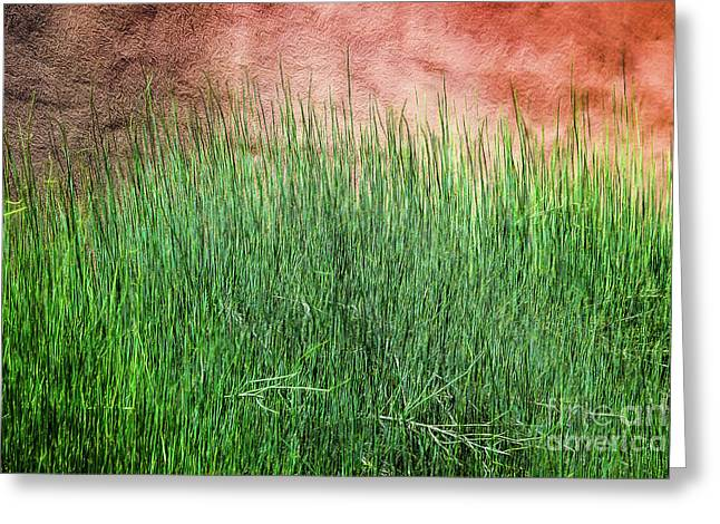Grass Against A Wall Greeting Card by Jon Burch Photography
