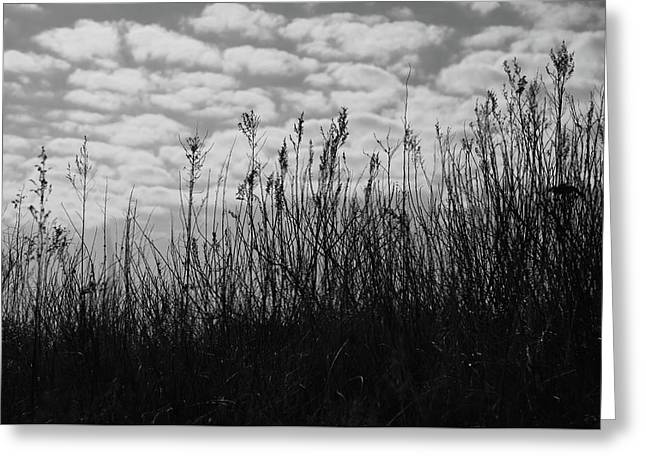 Grass Against The Background Of Clouds Greeting Card by Mariia Kalinichenko