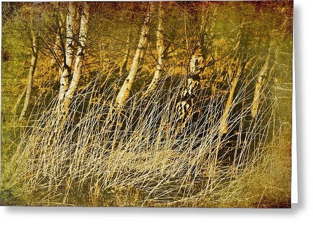 Grass And Birch Greeting Card by Meirion Matthias