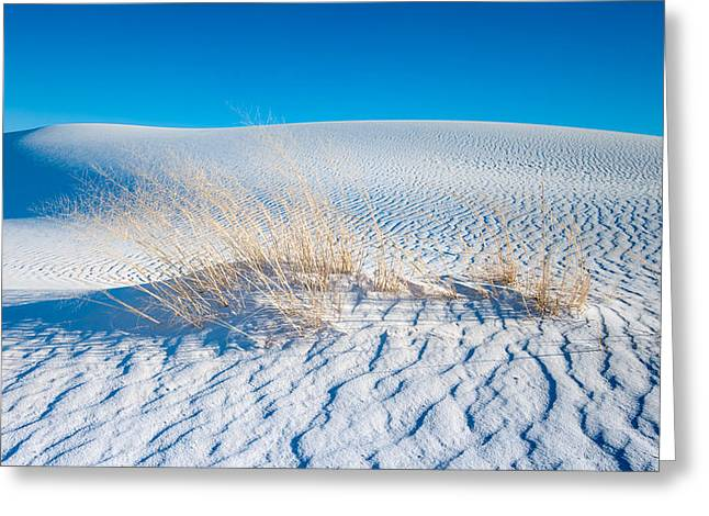 Grass And Dunes Greeting Card
