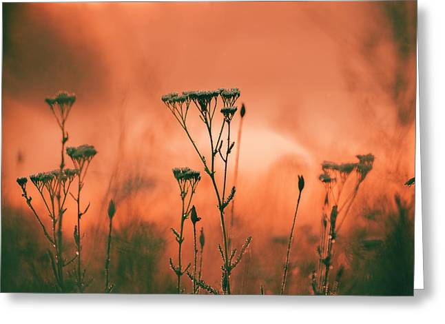Grass And Plants In The Morning Mist Greeting Card