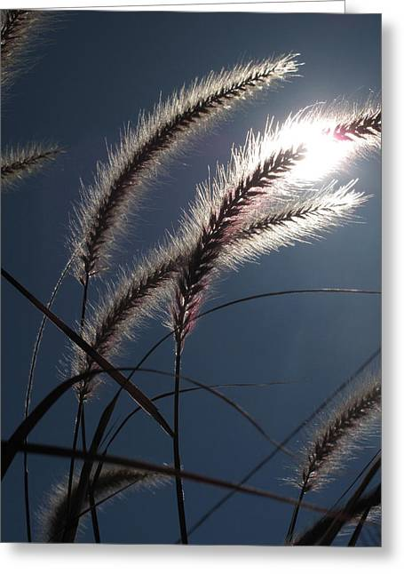 Grass And Sun  Greeting Card by Lyle Crump