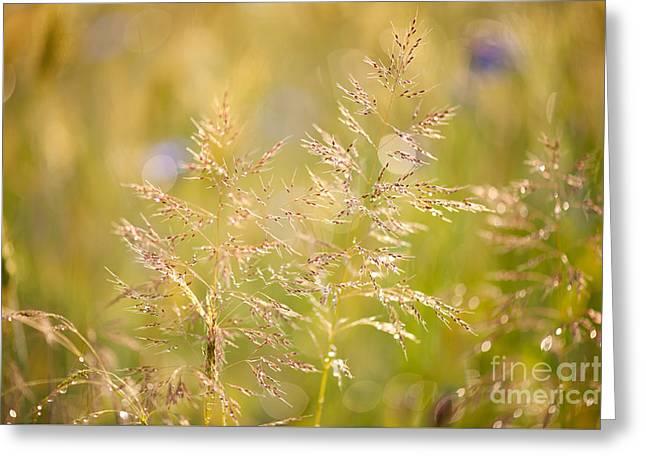Grass Closeup After The Rain Greeting Card