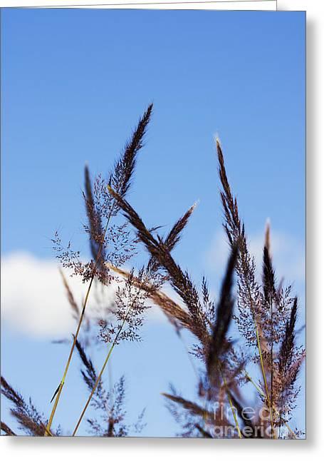 Grass Florets Greeting Card by Jorgo Photography - Wall Art Gallery