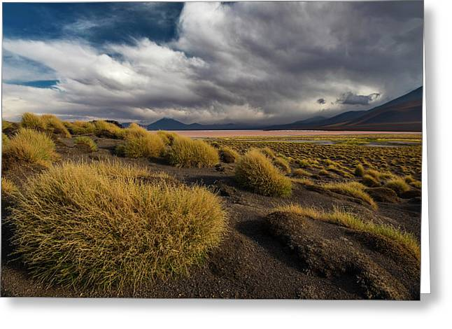 Grass Hat Greeting Card by Aaron Bedell