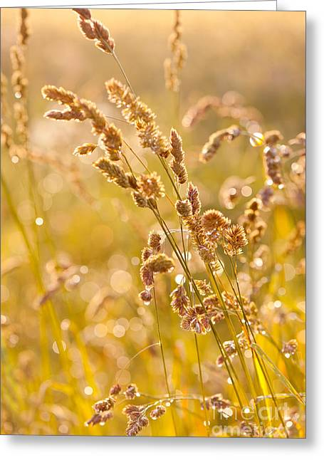Grass Meadow After The Rain Greeting Card by Arletta Cwalina