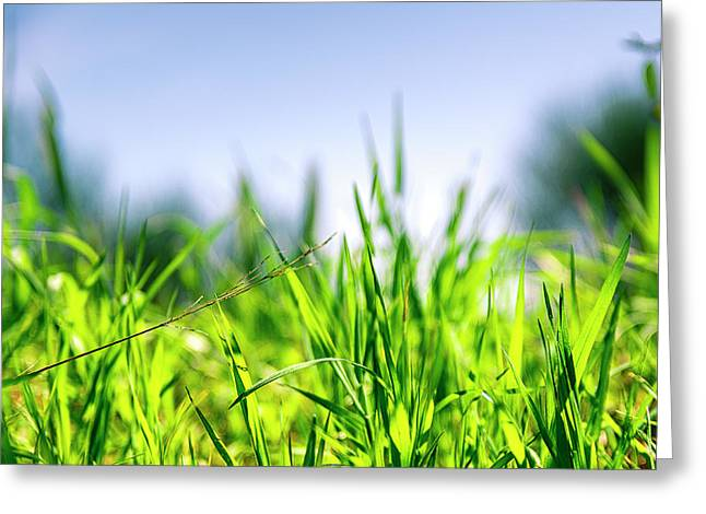 Greeting Card featuring the photograph Grass by Nikos Stavrakas