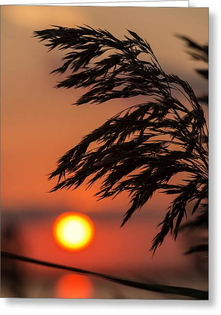 Grass Silhouette Greeting Card