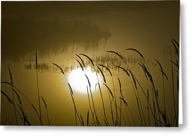 Grass Silhouettes Greeting Card