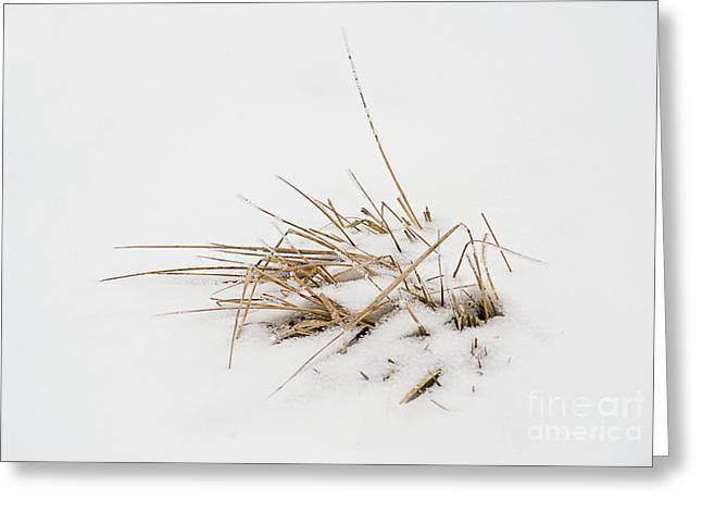 Grass Vignette Greeting Card by Fred Lassmann